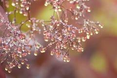 Autumn dew Stock Image