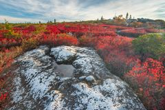 Dolly Sods West Virginia royalty free stock images
