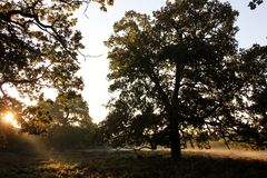 Autumn Morning Dunham Massey Cheshire Royaltyfri Foto