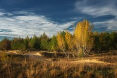 Autumn morning at the edge of the forest. Along the forest road Royalty Free Stock Photo