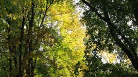 Autumn morning foliage stock video
