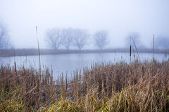 Autumn morning at a forest lake with fog and beautiful warm colors Royalty Free Stock Photo
