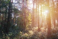 Autumn Morning Forest with sunshine, Hungary. Autumn Morning Forest with morning sunshine in the wilderness, Hungary royalty free stock image