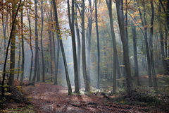 Autumn morning in the forest Stock Image