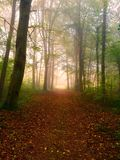 Autumn morning in the forest Royalty Free Stock Images