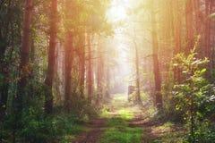 Autumn Morning Forest with sunshine, Hungary. Autumn Morning Forest with the forestry path in the sunshine / sunlight, Hungary royalty free stock photos