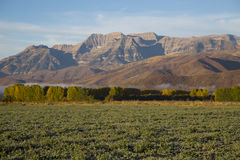 Autumn morning frosted field with poplars and mountains Stock Photos