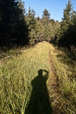 Autumn morning on hiking trail with grass and forest around Stock Photo