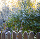 Autumn morning hoarfrost. The picture shows autumn morning hoarfrost on a fence and trees in back sun lighting stock photo