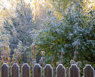 Autumn morning hoarfrost. The picture shows autumn morning hoarfrost on a fence and trees in back sun lighting royalty free stock photography