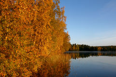 Autumn morning by the lake Royalty Free Stock Images