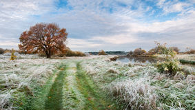 Belarus.Autumn Morning Landscape With First Frost On Green Grass, Yellow Lonely Oak And Small River.Panorama With Frosty Grass. Cold autumn morning in Belarus royalty free stock photography