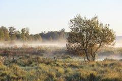 Autumn morning mist royalty free stock photo
