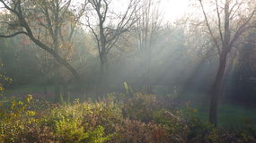 Autumn Morning Mist. Sunbeams poke through a light mist on a Autumn morning in October royalty free stock image