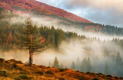 Autumn morning. Misty dawn in the Carpathians stock images