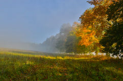 Autumn morning. Misty autumn morning with maple alley Stock Photography