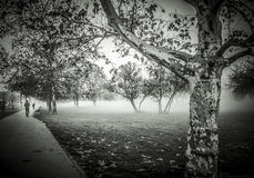 Autumn morning. Misty autumn morning near a park Stock Image
