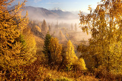 Autumn morning in mountain valley Stock Photography