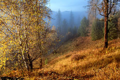 Autumn morning in mountains Stock Images