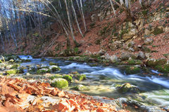 Autumn morning near the river. Beautiful rapid river with mossy stones flowing through autumn forest Royalty Free Stock Images