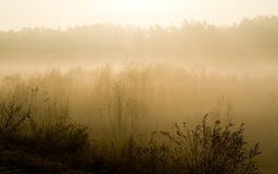 Autumn morning - November Royalty Free Stock Photography
