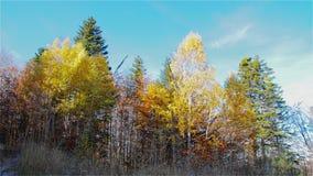 Autumn Morning op de Berg stock footage