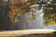 Autumn morning park Royalty Free Stock Photo