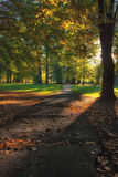 Autumn morning in park Royalty Free Stock Photos