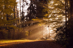 Autumn morning in park Royalty Free Stock Photo