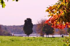 Autumn morning in the park. Royalty Free Stock Image