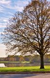 Autumn morning in the park. Royalty Free Stock Photo