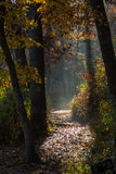 Autumn morning path. Stock Photo