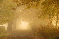 Autumn morning. Stock Images