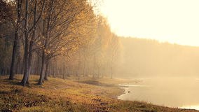 Autumn morning on river. Detail of a forest and river in autumn colors in the morning Stock Image