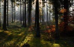Autumn morning in Rold Skov Denmark Royalty Free Stock Photo