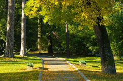 Autumn morning scene in Topcider park, wind blows and leaves are falling royalty free stock photo