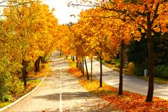 Local town streets on a autumn morning. Autumn morning on a small town in Finland. all the maple trees are turning in to mix of yellow, orange and red colors stock photography