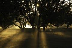 Rising sun in autumn, The Morton Arboretum, Lisle  Stock Images