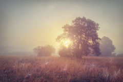Autumn morning sunrise on foggy meadow. Early morning on autumn field. Royalty Free Stock Image