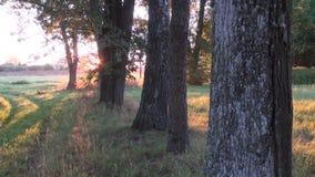 Autumn morning sunrise in old  village. Autumn morning sunrise in old ethnogpraphical village stock video
