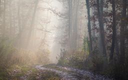 Path in the autumn morning forest stock images