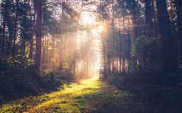 Autumn morning with sunshine in the forest, Hungary royalty free stock image