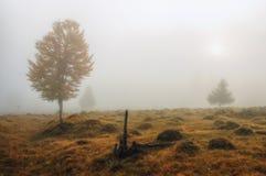 Autumn morning Stock Photo