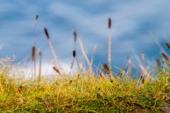 Autumn morning with water drops. Dew on the autumn morning on plants in beautiful landscape at the famous Cliffs of Moher and  OBrien`s Tower in Co. Clare Royalty Free Stock Photography
