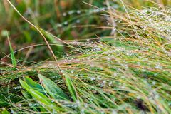 Autumn morning with water drops. Dew on the autumn morning on plants in beautiful landscape at the famous Cliffs of Moher and  OBrien`s Tower in Co. Clare Royalty Free Stock Photos