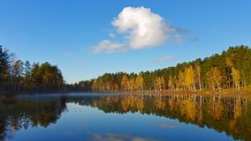 Yellow forest and blue sky with white clouds reflection on the mirror water on the forest lake. Autumn morning. Yellow forest and blue sky with white clouds Royalty Free Stock Photo