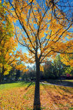 Autumn morning Royalty Free Stock Images