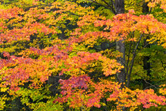 Autumn Mosaic Stock Images