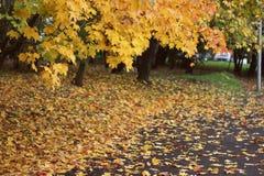 Autumn in Moscow city park Stock Photos