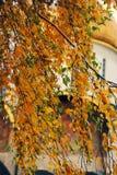 Autumn in Moscow Kremlin Stock Photo